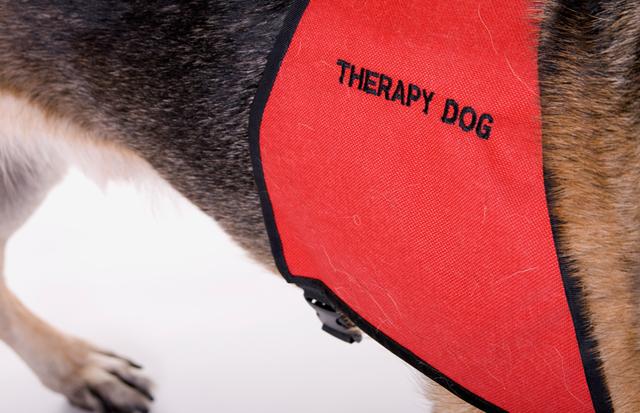 Канистерапия для престарелых, как выбрать собаку для терапии
