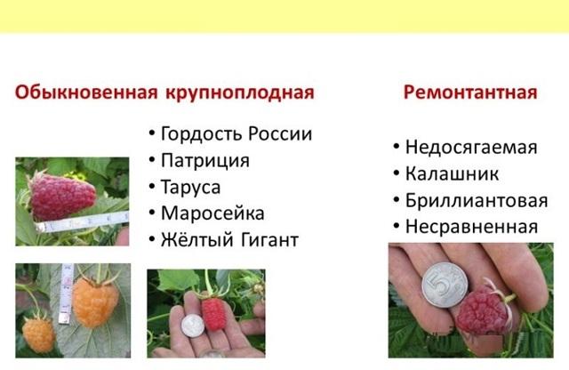 Самые интересные факты о малине: содеражние микроэлементов, как собирать и хранить ягоду