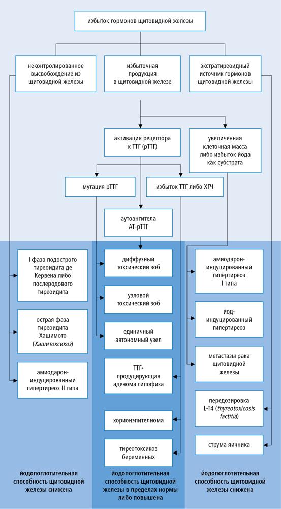 Базедова болезнь (гипертиреоз): причины и медикаментозное лечение
