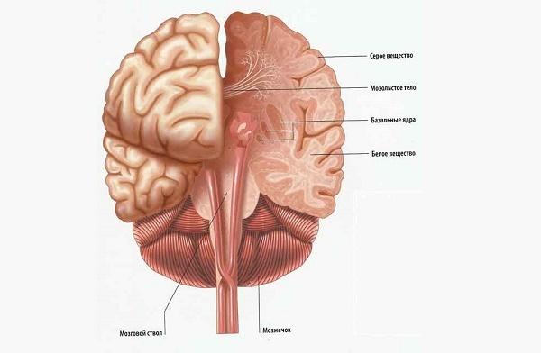 Признаки перивентрикулярного лейкоареоза головного мозга: снижение памяти и резка смена настроения