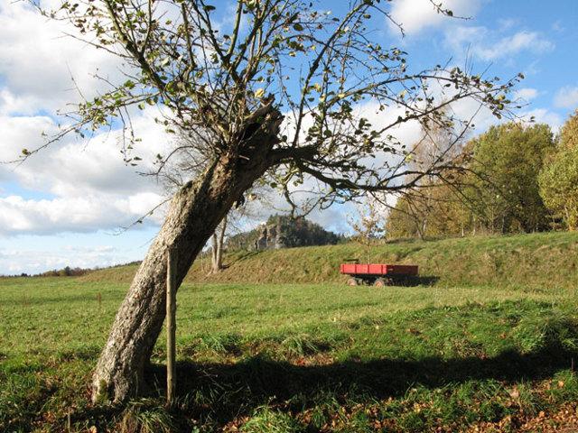 Предоставление земельного участка инвалидам 1 группы: все требования для получения земли