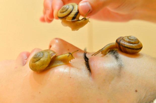 Улиткотерапия: основные правила проведения процедуры