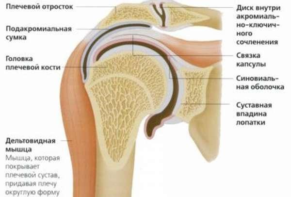 Причины развития тендинита сухожилия надостной мышцы плеча: травмы и огромные нагрузки