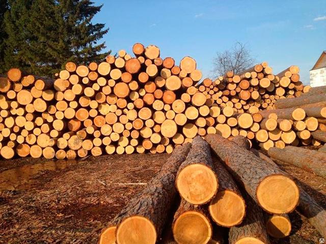 Кому положен бесплатный (льготный) лес от государства: ветераны, инвалиды и молодые специалисты