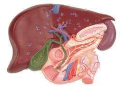 Холецистит в пожилом возрасте: симптомы и лечение