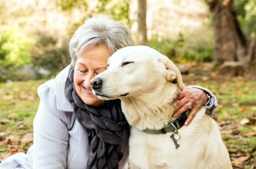 Как правильно выбрать собаку для престарелого человека