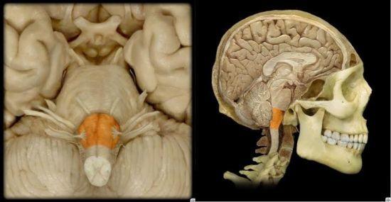 Дисфагия пищевода: симптомы и лечение
